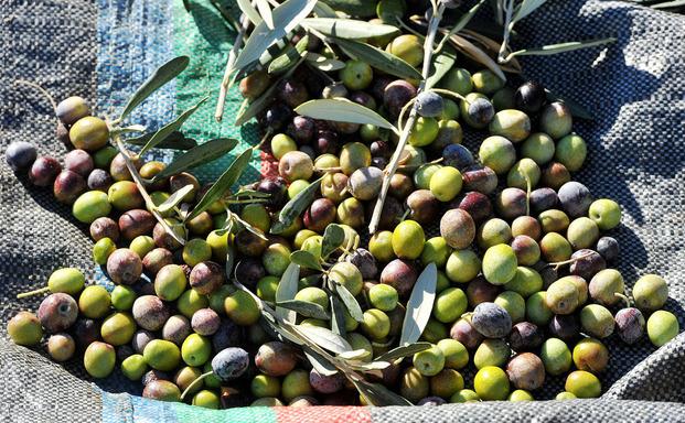 Αύξηση κατά 63,6% των ελληνικών εξαγωγών ελαιολάδου στην Ιαπωνία