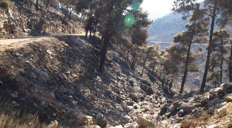 Σε ύφεση η πυρκαγιά στο δ. Δίρφης-Μεσσαπίων Ευβοίας