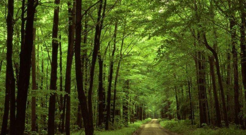 Παγκόσμια Ημέρα Περιβάλλοντος:Μία απο τις σημαντικότερες προκλήσεις
