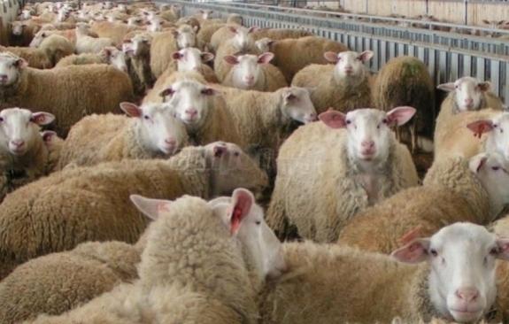 Αυστηρές κυρώσεις για ελληνοποιήσεις αγροτικών – κτηνοτροφικών προϊόντων