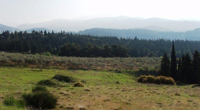 Δασικές εκτάσεις: Δυνατότητα εξαγοράς με 30 ευρώ το μήνα σε 100 δόσεις