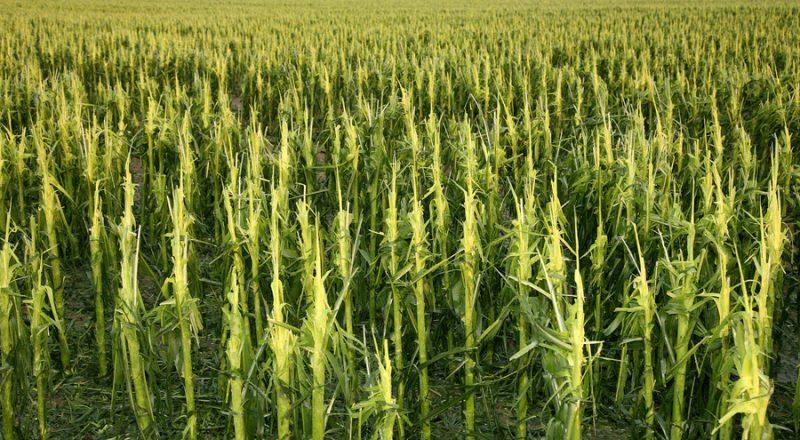 Τα οφέλη της εισαγωγής των νέων τεχνολογιών στην αγροτική παραγωγή