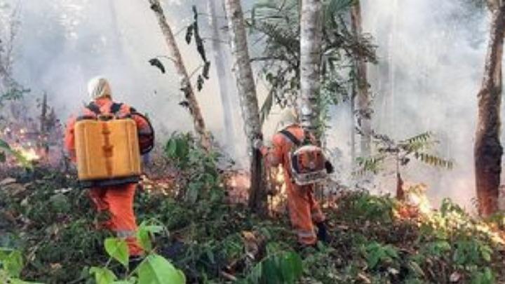 «Αμαζόνιος SOS»:Ο πνεύμονας του πλανήτη είναι στις φλόγες