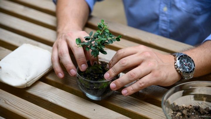 Αγροτεχνολογία PlantBox: Το μικροσκοπικό ελαιόδεντρο που ταξιδεύει σε όλον τον κόσμο