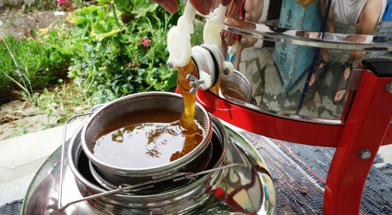 Στόχος της κυβέρνησης, η επένδυση στο μέλλον της ελληνικής μελισσοκομίας