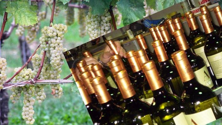 Η πανδημία μπορεί να επιφέρει μείωση 50% των πωλήσεων οίνου στην Ευρώπη
