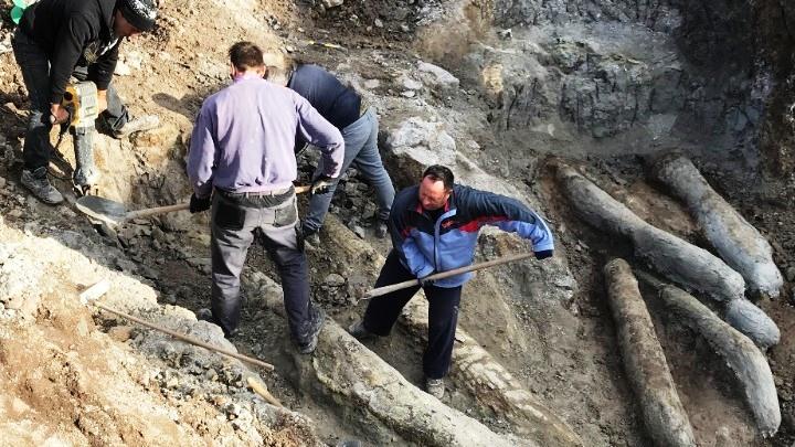 Σπουδαία ανακάλυψη. Νέα ευρήματα απολιθωμένου δάσους στη Λέσβο