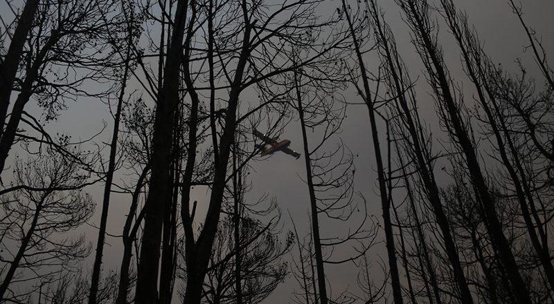 Σε εξέλιξη οι εργασίες αποκατάστασης των πυρόπληκτων περιοχών στη Βόρεια Εύβοια